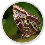 Common Blue Morpho Round Beach Towel