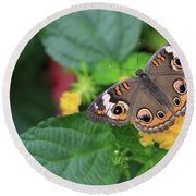 Common Buckeye II Round Beach Towel