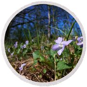 Common Dog-violet Round Beach Towel