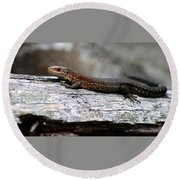 Common Lizard Round Beach Towel