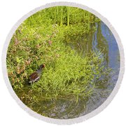 Common Moorhen At The Waters Edge Round Beach Towel