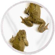 Common Toad Round Beach Towel