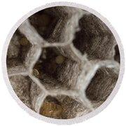Common Wasp Larva Round Beach Towel