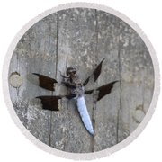 Common White Tail Dragonfly Round Beach Towel
