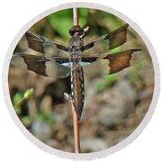 Common Whitetail Dragonfly - Plathemis Lydia - Female Round Beach Towel
