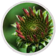 Coneflower Close-up Round Beach Towel