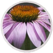 Coneflower Visitor Round Beach Towel