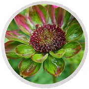 Confused Cone Flower Round Beach Towel