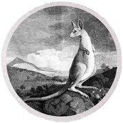 Cook: Kangaroo, 1773 Round Beach Towel