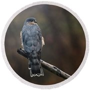 Coopers Hawk Round Beach Towel