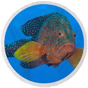 Coral Grouper, Kimbe Bay, Papua New Round Beach Towel