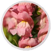 Coral Snapdragons Round Beach Towel