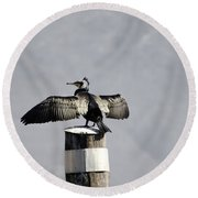 Cormorant Bird Round Beach Towel