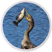 Cormorant Catches Catfish Round Beach Towel
