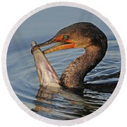 Cormorant With Large Fish Round Beach Towel