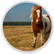 Cornish Pony Round Beach Towel
