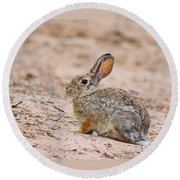 Cottontail Bunny Round Beach Towel