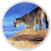 Cougar In The Sky Round Beach Towel