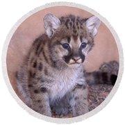 Cougar Kitten Round Beach Towel