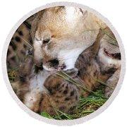 Cougar Mother Licks Kitten Round Beach Towel