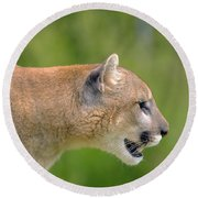 Cougar Profile Round Beach Towel