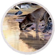 Cougar Stops For A Drink Round Beach Towel