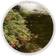 County Kerry, Ireland Fuchsia Bush Round Beach Towel
