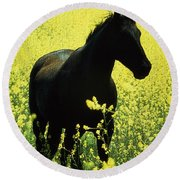County Tipperary, Ireland Horse In A Round Beach Towel