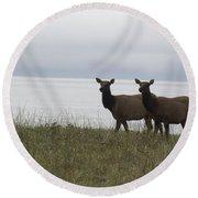 Cow Elk Pair On Beach Round Beach Towel