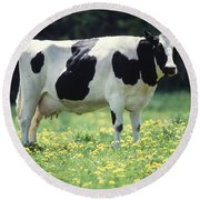 Cow In Pasture Round Beach Towel