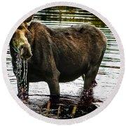Cow Moose Round Beach Towel
