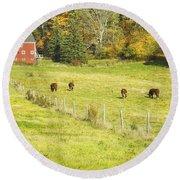 Cows Grazing On Grass In Farm Field Fall Maine Round Beach Towel