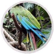 Coy Parrot Round Beach Towel
