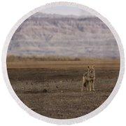 Coyote Badlands National Park Round Beach Towel
