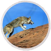Coyote Climbs Mountain Round Beach Towel