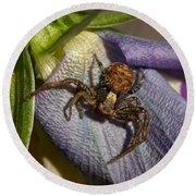 Crab Spider In A Violet Round Beach Towel