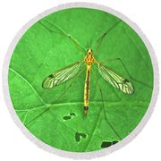 Crane Fly 7623 Round Beach Towel
