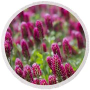 Crimson Clover In All Its Glory Round Beach Towel