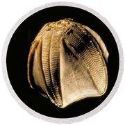 Crinoid Fossil Round Beach Towel