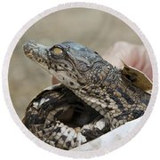 Crocodile And Alligator Breeding Farm  Round Beach Towel