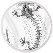 Cryptobranchus, Living Fossil Round Beach Towel