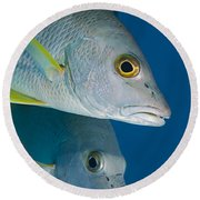 Cubera Snappers Round Beach Towel