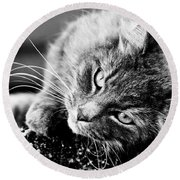 Cuddly Cat Round Beach Towel
