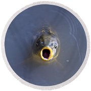 Curious Carp Round Beach Towel