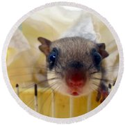 Curious Flyer Round Beach Towel