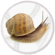 Curious Snail Round Beach Towel