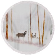 Curious Visitors Round Beach Towel