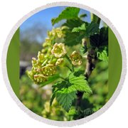 Currant In Bloom Round Beach Towel