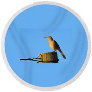 Curved Billed Thrasher Sitting On A Post Round Beach Towel