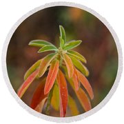 Cushion Spurge Round Beach Towel